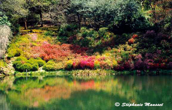 flower bed reflecting in a lake