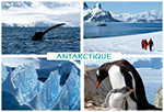 Participez à la promotion de photos-voyages.com Antarctique