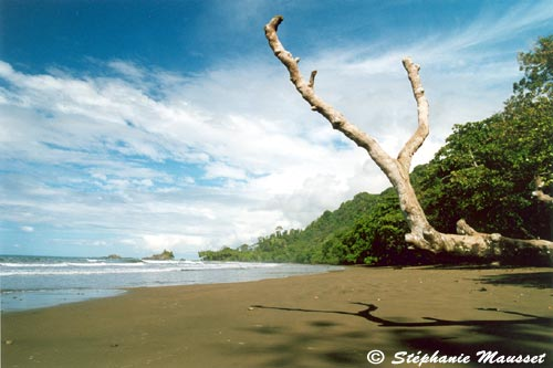 photo de plage dominicalito du costa rica. Black Bedroom Furniture Sets. Home Design Ideas
