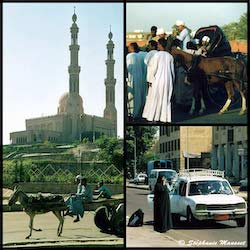 [Egyptian people photos - urban means of transport in Egypt]