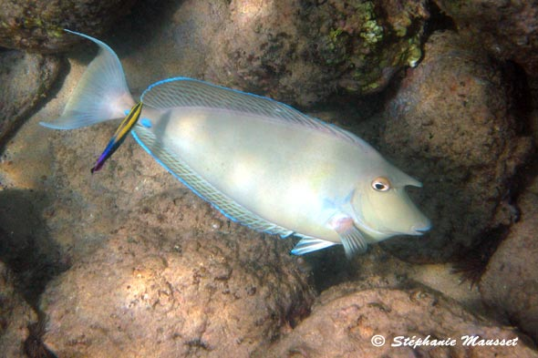 photo sous marine de poisson licorne