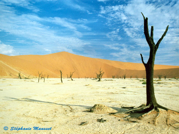Best of photos le Dead vlei en Namibie