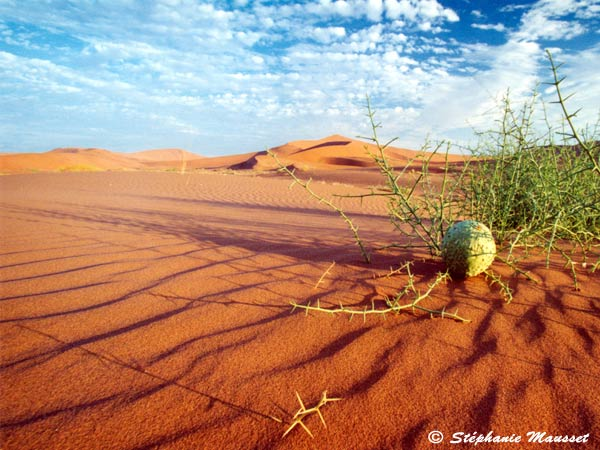 Best of photos paysage du Namib et Nara