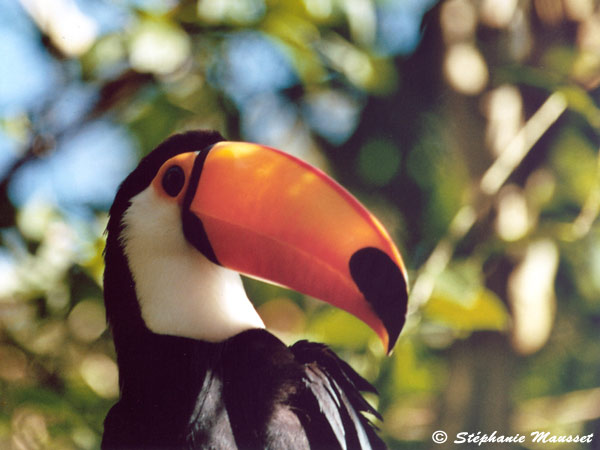 Best of photos toucan au bec orange